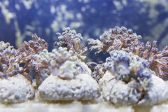 Marine aquarium fish tank Stock Images