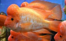 Marine aquarium fish. Tropical aquarium colorful stock photography
