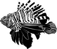 Marine aquarium fish. Zebra Lionfish Royalty Free Stock Photography