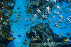 Marine aquarium with fishes Royalty Free Stock Photo