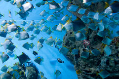 Marine aquarium with fishes Royalty Free Stock Photos
