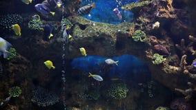 Marine. Aquarium floating fish in it stock video
