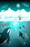 Marine arctic underwater life Stock Photography