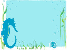Marine background. Marine blue background with seahorse and shell Stock Photo