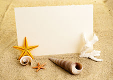 Marine background. Marine still life with empty paper sheet and some seashells stock photos