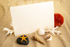 Marine background. Marine still life with empty paper sheet and some seashells stock image