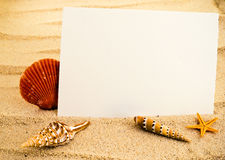 Marine background. Marine still life with empty paper sheet and some seashells stock photo