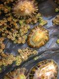 Marine background Stock Photo
