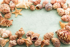 Marine background, frame with seashells and starfish Stock Photos