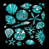 Marine collection, ornate seashells for your design Royalty Free Stock Photo