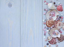 Marine background with seashells on wooden planks. Border of seashells. Top view Stock Image