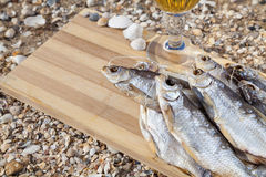 Marine beer culinary still life Stock Image