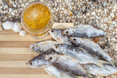 Marine beer culinary still life Royalty Free Stock Image