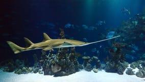 Marine Biology, Underwater, Water, Fauna stock image
