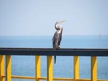 Marine Bird Fotografie Stock Libere da Diritti