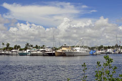 Marine Boats Framed by Trees. Boats at a south florida marina framed by small patch of treens in the foreground Stock Photography