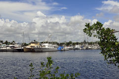 Marine Boats Framed by Trees. Boats at a south florida marina framed by small patch of treens in the foreground Stock Images