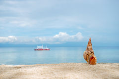 Marine brown conch of shelfish on the white sand tropical beach with turquise sea background Stock Photo