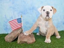 Marine Bulldog Royaltyfri Fotografi