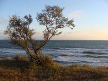 Marine coast. This is marine coast of Black Sea Royalty Free Stock Photo