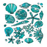 Marine collection, ornate seashells for your design Stock Image
