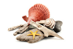 Marine composition. Stock Image