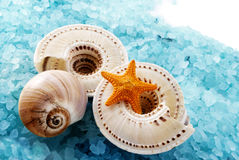 Marine composition. Stock Photography