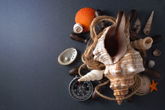 Marine composition. Royalty Free Stock Image