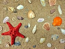 Marine composition. Red starfish lying on the beach sand with shells Royalty Free Stock Images