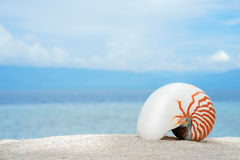 Marine conch of shelfish nautilus on the white sand tropical beach with turquise sea background. At sunny day Royalty Free Stock Images