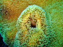 Marine Coral Detail Royalty Free Stock Images