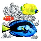 Marine coral fish with corals, isolated. Colorful sea fishes in aquarium. Watercolor illustration on white background Royalty Free Stock Photos