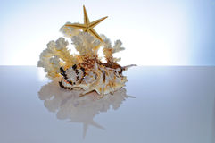 Marine coral and shells Stock Images