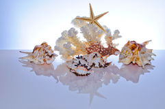 Marine coral and shells Royalty Free Stock Photo