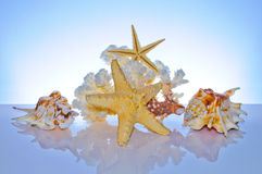 Marine coral and shells Stock Image