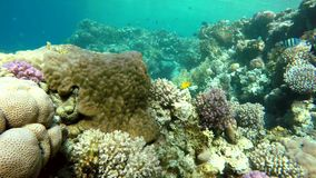 Marine,  The corals and fish. Coral reef. Exotic fishes. The beauty of the underwater world. Life in the ocean. Diving on a tropical reef. Submarine life. Clear stock video footage