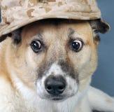 Marine Corp Dog. Stock Image