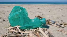 Marine crab on discharged plastic bottle on polluted sandy sea coast ecosystem