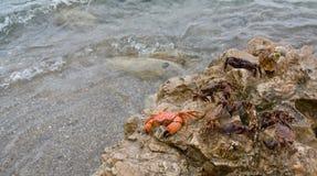 Marine crabs Royalty Free Stock Photography