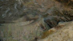 Marine Crabs Runs entlang Felsen des Meeres Draufsicht-Wurf das klare Wasser stock video
