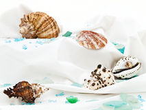 Marine decor Stock Photography