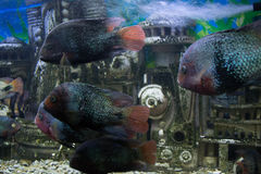 Marine dwellers. This photo shows the inhabitants of the sea depths Royalty Free Stock Photography