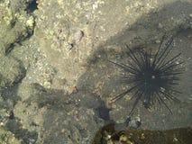 Marine Ecosystem e praia fotos de stock royalty free