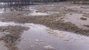 Marine Estuaries Mud Flats - Time Lapse stock video