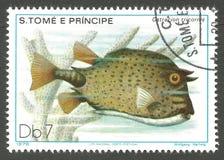 Marine Fauna, Boxfish fotos de archivo