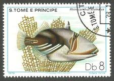 Marine Fauna Picasso Triggerfish Royaltyfri Fotografi