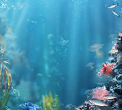 marine Fische, Meerespflanzen, Luftblasen Aquarium mit Fischen und Korallen Lizenzfreie Stockfotografie