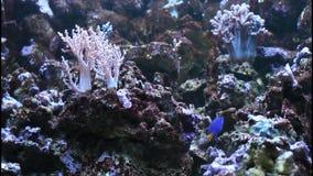 Marine fish in the aquarium Stock Image