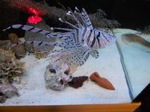Marine fish on the bottom of an aquarium royalty free stock photos