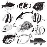 Marine Fish Collection Fotografia Stock Libera da Diritti